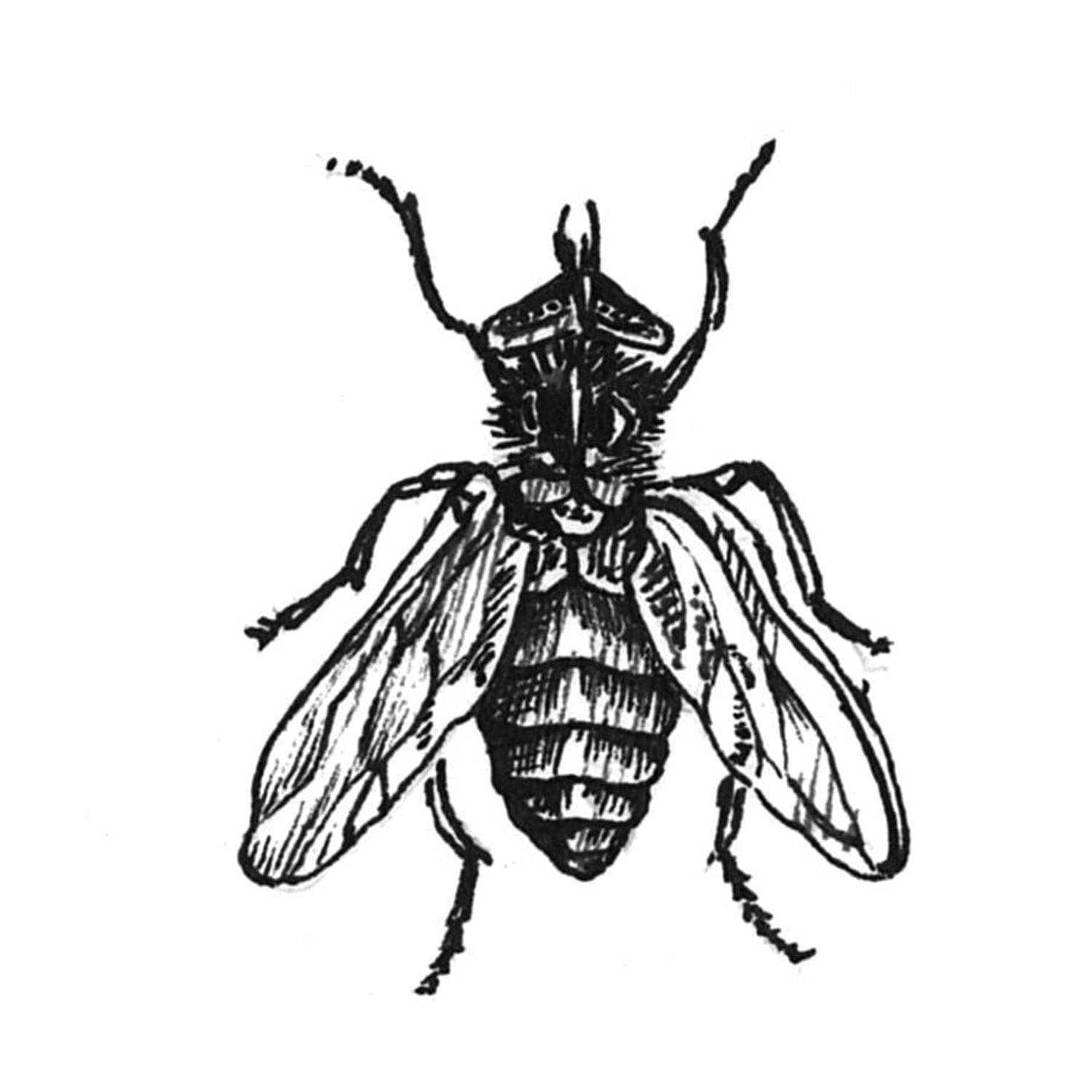 Fly on the Wall Intricate Ink Print-0