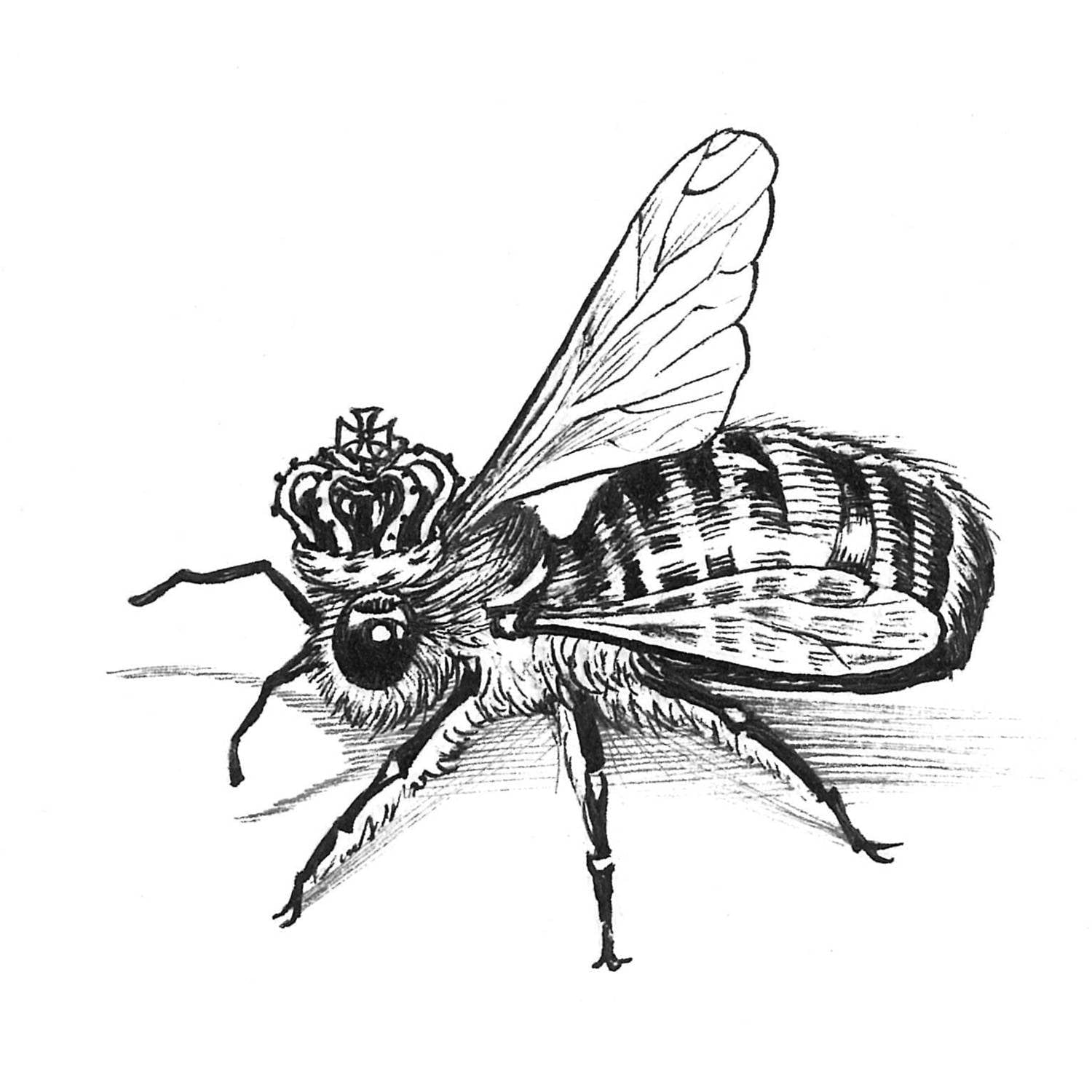 Queen Bee Intricate Ink Print-0