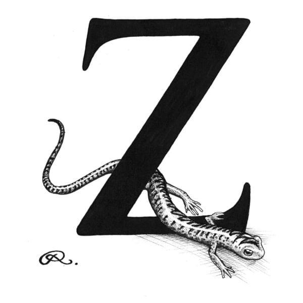 Z - Zig Zag Salamander Intricate Ink Print