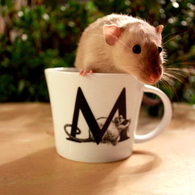 Mighty Mugs
